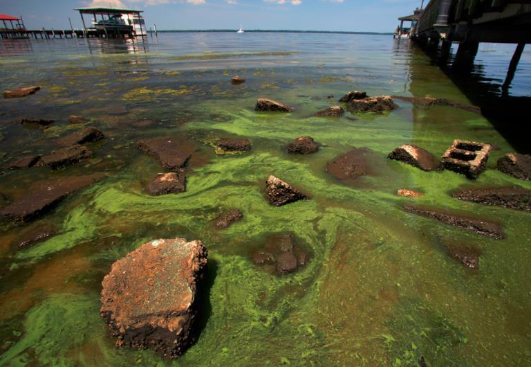 Zona costera con exceso de algas, signo de eutrofización