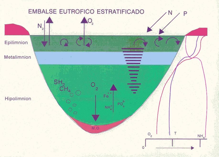eutrofizacion_11