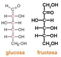 glucosa y gructosa triplenlace.com