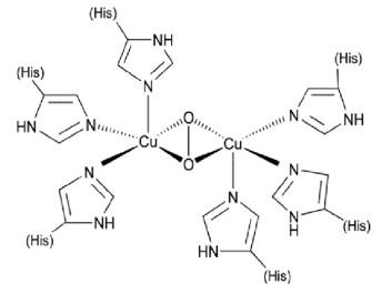 sitio_activo_hemocianina