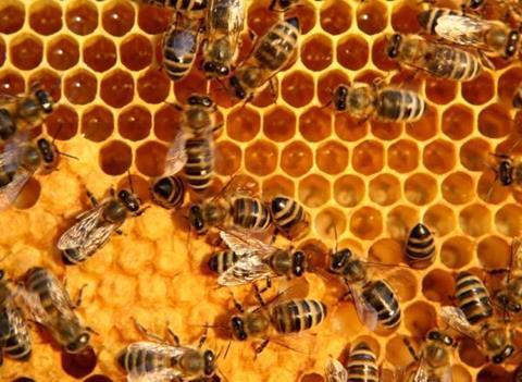 miel y abejas triplenlace.com