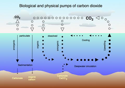 La Acidificación De Los Océanos Causas Y Efectos Triplenlace