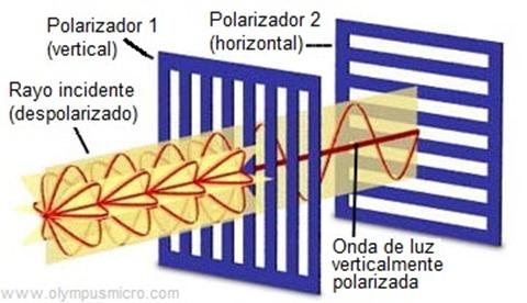 luz polarizada triplenlace